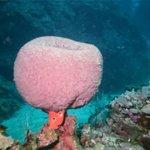 Big Sponge (on a stick!)