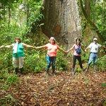 En plena selva bajo un arbol de Huimba