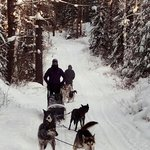 White Wilderness Dog Sledding