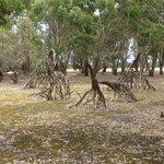Hanson Bay Wildlife Sanctuary & Koala Walk