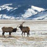 Elks Sparring
