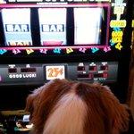 Dog friendly casino experience
