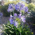 NZ flowers in bloom