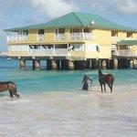 Pier at Radisson Aquatica Racehorses in foreground