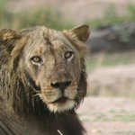 We were within 5 meters of this lion.