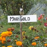 The Cute Munnar Bird - Posing for the photo..
