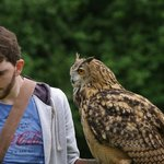 Falconry experience- awesome