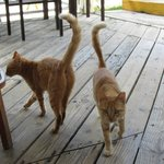 Area cats - very friendly!