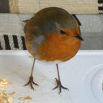 Robin visiting our camper van at Whitemead
