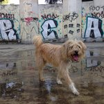 Foto lindbergh en el parque México. Excelente lugar para traer a tus perros