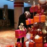 Hall : décoration de Noël 2013