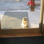The Village Inn Restaurant Cat