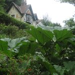 Shanklin Chine and amazing plants