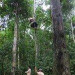 Canopy climbing...