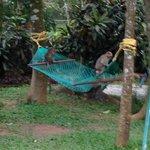 hammock - free users