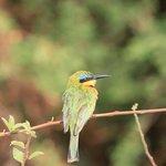 A 'birder's' paradise