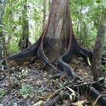 Wasserstand nach Regenzeit auf Baum ersichtlich