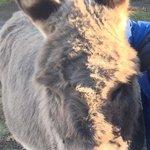 Jerusalem Donkey, La Salette Shrine, Festival of Lights, Attleboro, MA