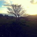 Wilderbeast at sunset