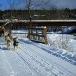Vermontology customers going dog sledding- Vermont Tours