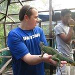 holding iguana