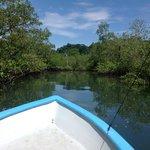 Ausflug in die Mangroven im Golfo Dulce