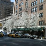 Madison Avenue, Upper East Side, NYC