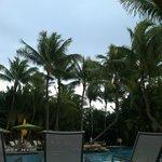 Beautiful trees around the pool
