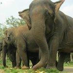 elephant santurary