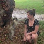 monkey pic 3