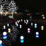 Fetival of Lights Cincinnati Zoo