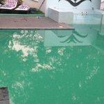 Pond water swimming pool