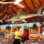 el Tiburon de la Costa
