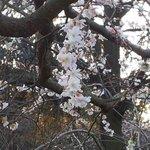 Дерево, цветущее в декабре