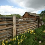 Corrals in the spring