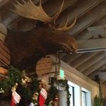 Where's the rest of that moose?  Rosie's in Tahoe City!