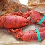 Fresh lobster. Steamed. Seasoned. Simple.