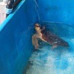 ricovero delle tartarughe porto vecchio