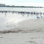 skimmers, willets, terns, gulls, and more