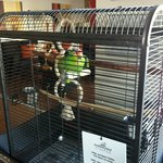 The pet parrot in reception