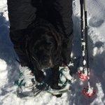 Herc Snowshoeing