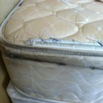 mold on mattress
