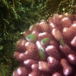 Lovely corals