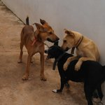 Security Team - Bruno, Blackie & Rex