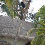 Cutting coconut tree