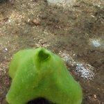 Shore dive Asahan - Under water 8
