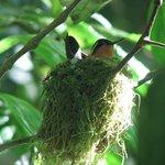 Hummingbird in nest along trail