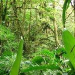 Monteverde Reserve Cloud forest