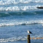 Ocean and Seagulls at Nye Beach