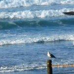Ocean and Seagulls at Nye Beach